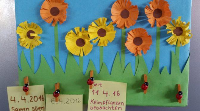 Das Ringelblumenprojekt