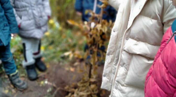 Die 2c pflanzt einen Baum im Schulgarten